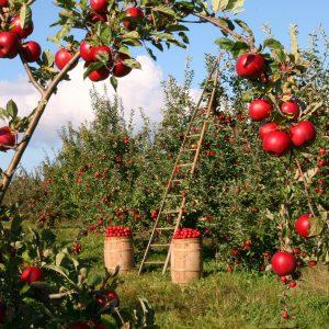 農地バンクは日本の農業の役に立つの?メリット・デメリットをご紹介